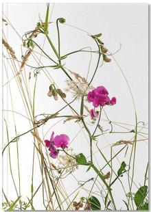 Flora - Wicke
