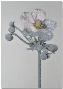 Staub - Japanische Anemone
