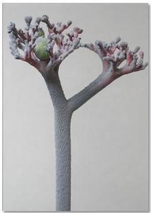 Staub - Korallenblume