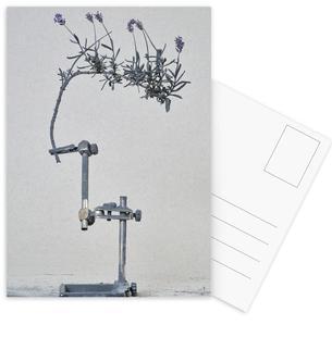 Staub - Lavendel