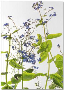 Flora - Vergissmeinnicht