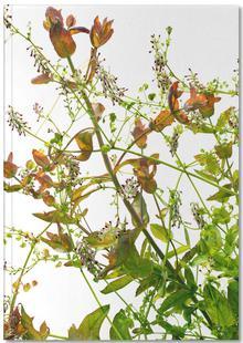 Flora - Eukalyptus