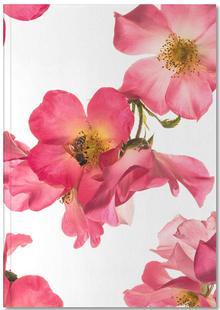Flora - Rose 2