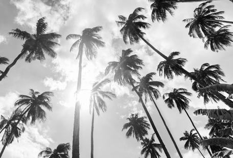 Palmenhain