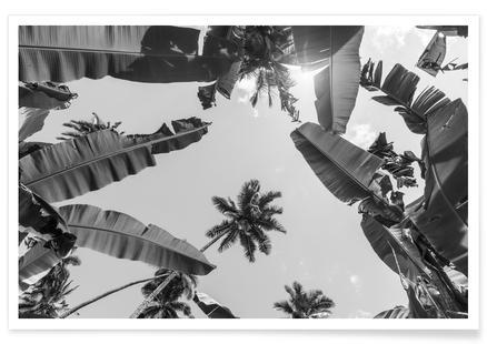 Palmen und Bananen