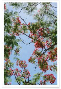 Flammenbaum-Äste
