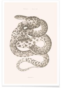 Reptiles - Plate XXII