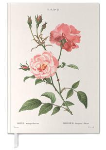 Rosier - Toujours Fleuri
