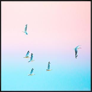 Pastgulls
