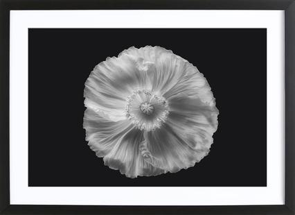 Poppy in Mono II