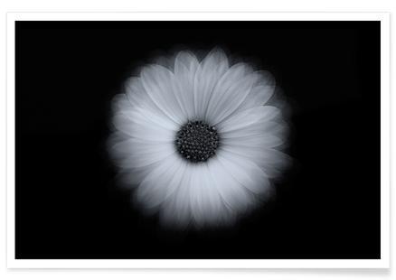 A Daisy Experiment