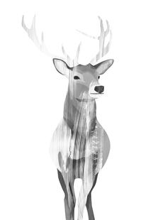 Deer Black & White