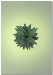 Air Pineapple