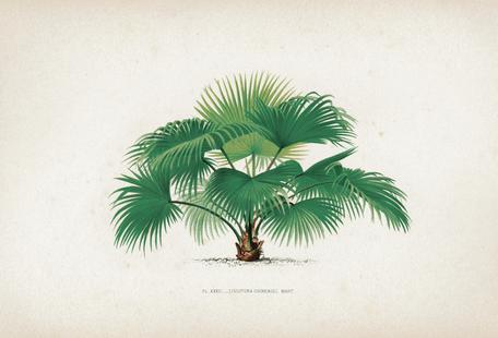 Les Palmiers 32 - Kerchove