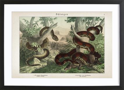 Schlangen 1 - Schubert