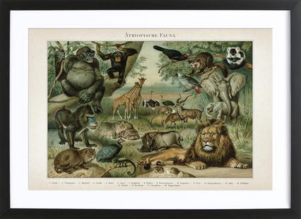 Äthiopische Fauna - Meyers