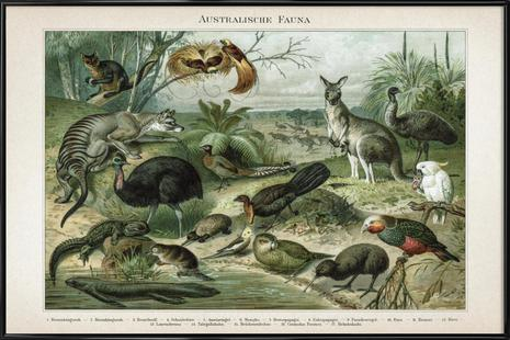 Australische Fauna - Meyers