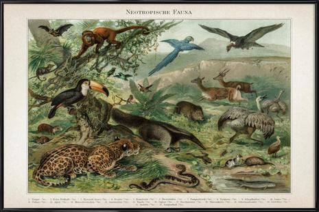 Neotropische Fauna - Meyers