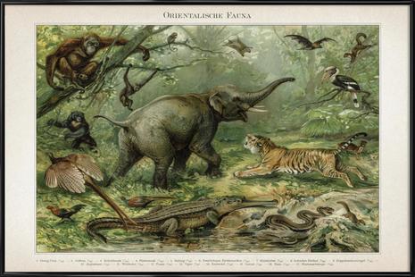 Orientalische Fauna - Meyers