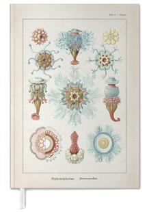 Tafel 17 - Haeckel