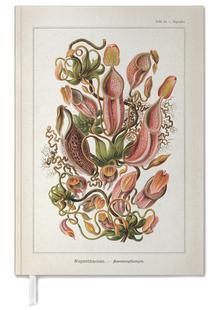 Tafel 62 - Haeckel