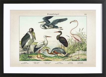 Sumpfvögel 25 - Schubert