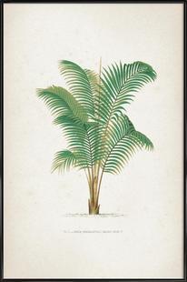 Les Palmiers 1 - Kerchove