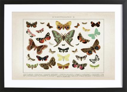 Schmetterlinge 2 - Brockhaus