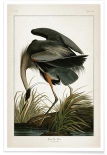 Great Blue Heron - Audubon