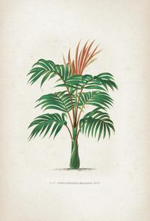 Les Palmiers 6 - Kerchove