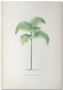 Les Palmiers 13 - Kerchove