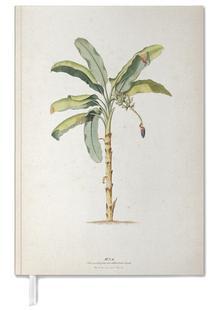 Musae Maculato - Ehret