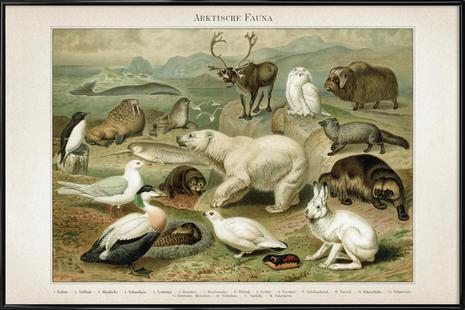Arktische Fauna - Meyers