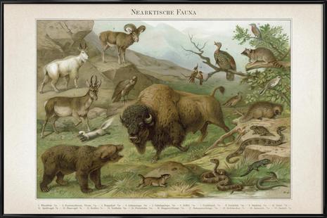 Nearktische Fauna - Meyers