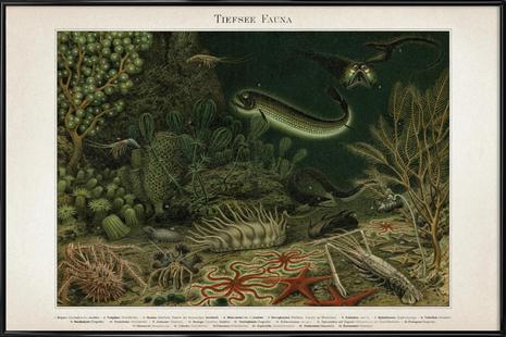 Tiefsee Fauna - Meyers