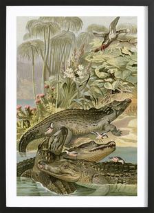 Krokodil - Brehm