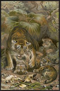 Tiger - Brehm