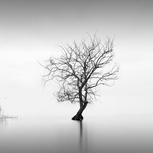 Albero Nel Lago Trasimeno I