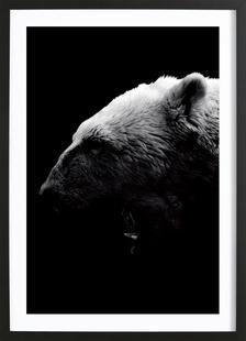 Dark Polar Bear
