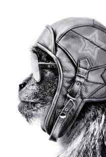 Aviator Monkey