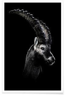 Dark Capricorn