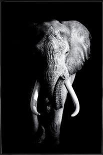 Dark Elephant