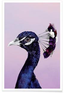 Purplish Peacock