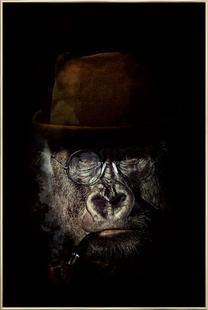 Classy Gorilla