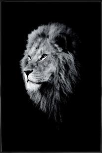 Dark Lion Head