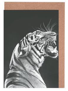 Grey Tiger