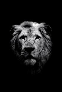Dark Lion Close-up