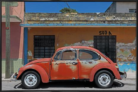 Mexican Beetle 1