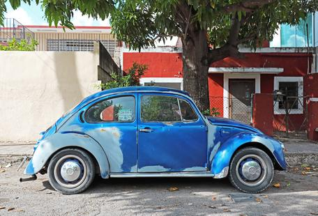 Mexican Beetle 11