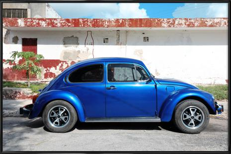 Mexican Beetle 12